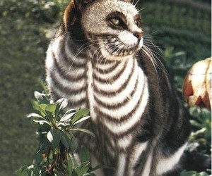 cat and skeleton image