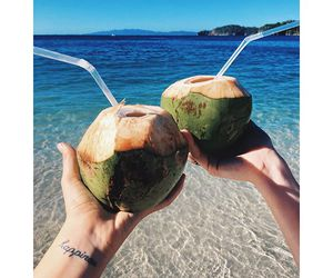 beach, beautiful, and coconut image