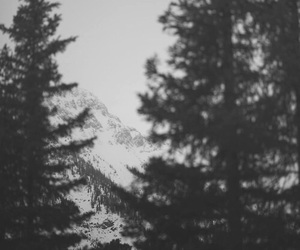 Darkness, forest, and miss you image