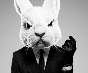 rabbit, misfits, and suit image