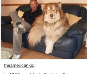 dog, funny, and battle image