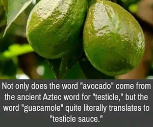 cool, fact, and testicles image