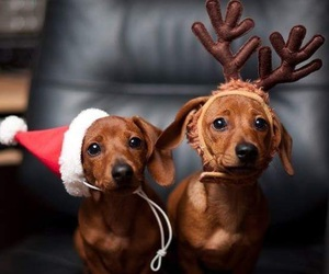 christmas, dogs, and wallpapers image