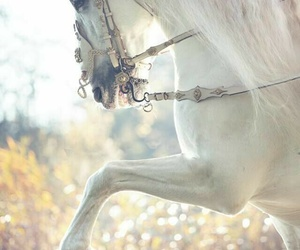 horse, white, and green image