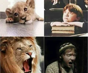 harry potter, ron weasley, and lion image