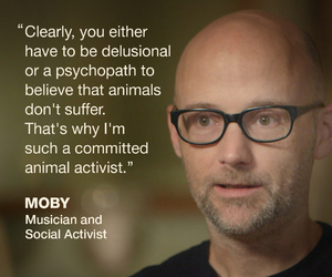 animal rights and animal activist image