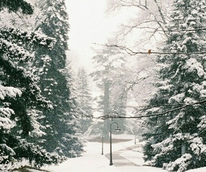 winter, ❄, and snow image