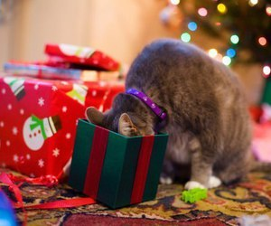 christmas, cat, and present image