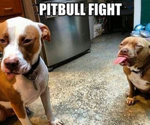 fight, funny, and lol image