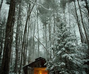 cabin, trees, and december image