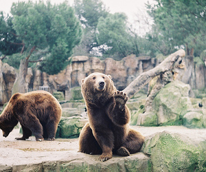bear, animal, and zoo image