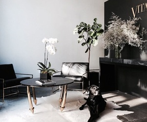 interior, style, and dog image