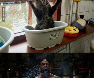 cat, funny, and wolverine image