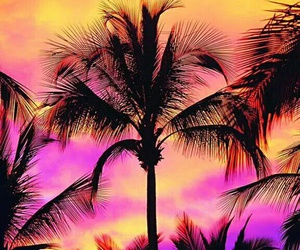beautiful, palm trees, and wallpaper image