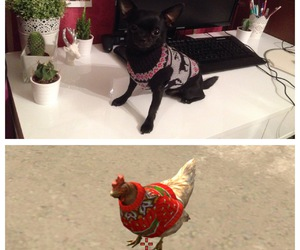 Chicken, chihuahua, and christmas image