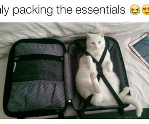 cats and travel image