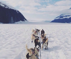 dog, winter, and mountains image
