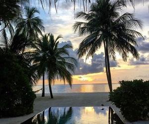 paradise, pool, and luxury image