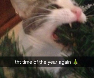 cat, meme, and christmas image