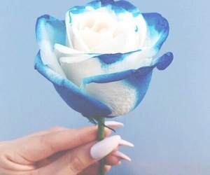 'blue', 'white', and 'roses' image
