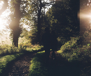nature, forest, and sun image