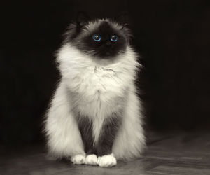 beauty, sweet, and cat image