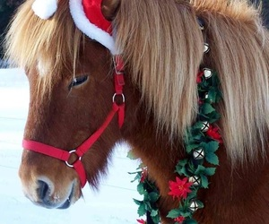 christmas and horse image