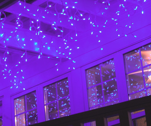 header, lights, and purple image