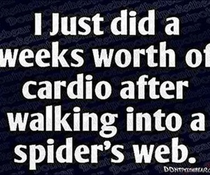 funny, cardio, and spider image