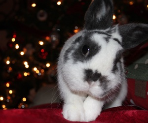 bunny, holiday, and winter image