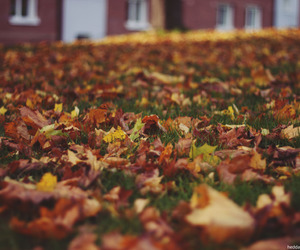 autum, colourfull, and fall image
