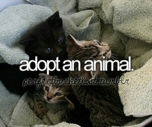 animal, adopt, and before i die image