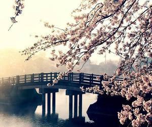flowers, bridge, and wallpaper image