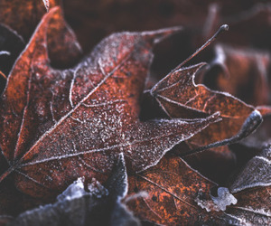 leaves and snow image