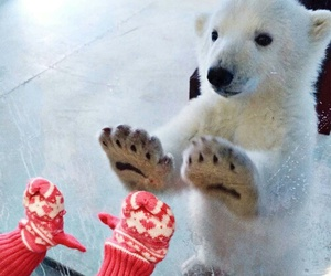 cute, animal, and bear image
