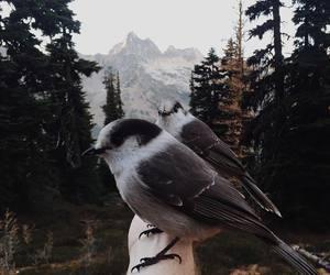 animal and bird image