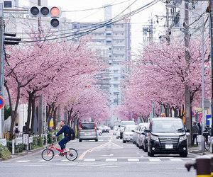 日本, 名古屋, and cherry blossoms image