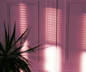 pink, plants, and aesthetic image