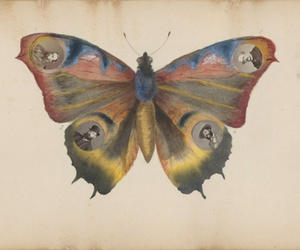 butterfly and Collage image
