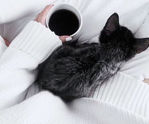 cat, cozy, and sweather image