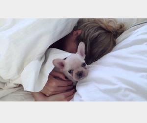 animals, bed, and french bulldog image
