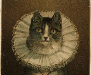 kitty lace image