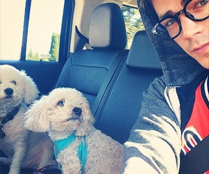 dog, grant gustin, and cute image