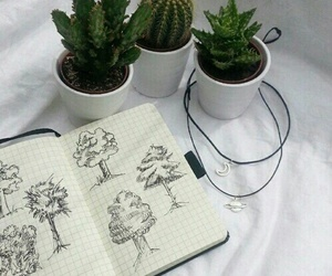 plants, cactus, and grunge image