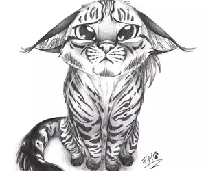 cat, animal, and drawing image