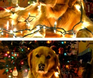 christmas, dog, and lights image