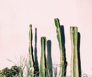 cactus, pink, and indie image
