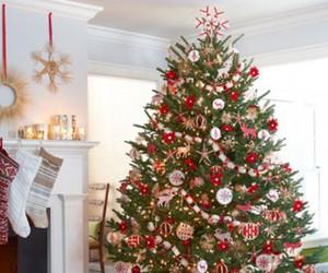 christmas, christmas tree, and tree image