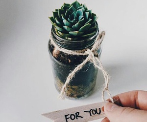 plant, for you, and gift image