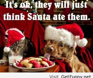 dog, christmas, and cat image